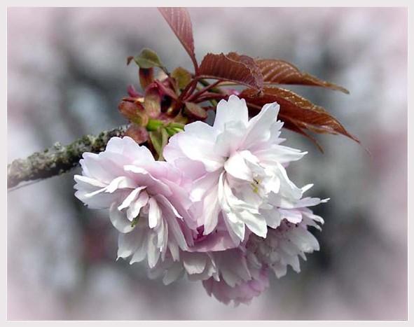 ピンク色の景色・・・。_f0045132_1195254.jpg