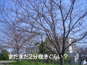 c0035443_100013.jpg