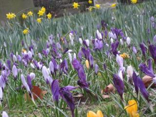 Spring_b0046388_4155749.jpg