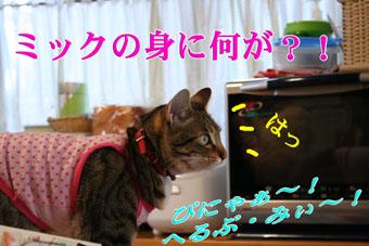 f0101903_1626645.jpg