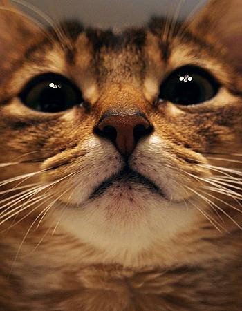[猫的]うなぎボーン_e0090124_1027208.jpg