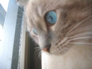 野良猫⇒地域猫  その3_c0006826_13302326.jpg