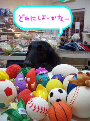 新しいおもちゃ来ました☆_f0098338_18594458.jpg