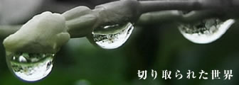 a0012950_13162168.jpg