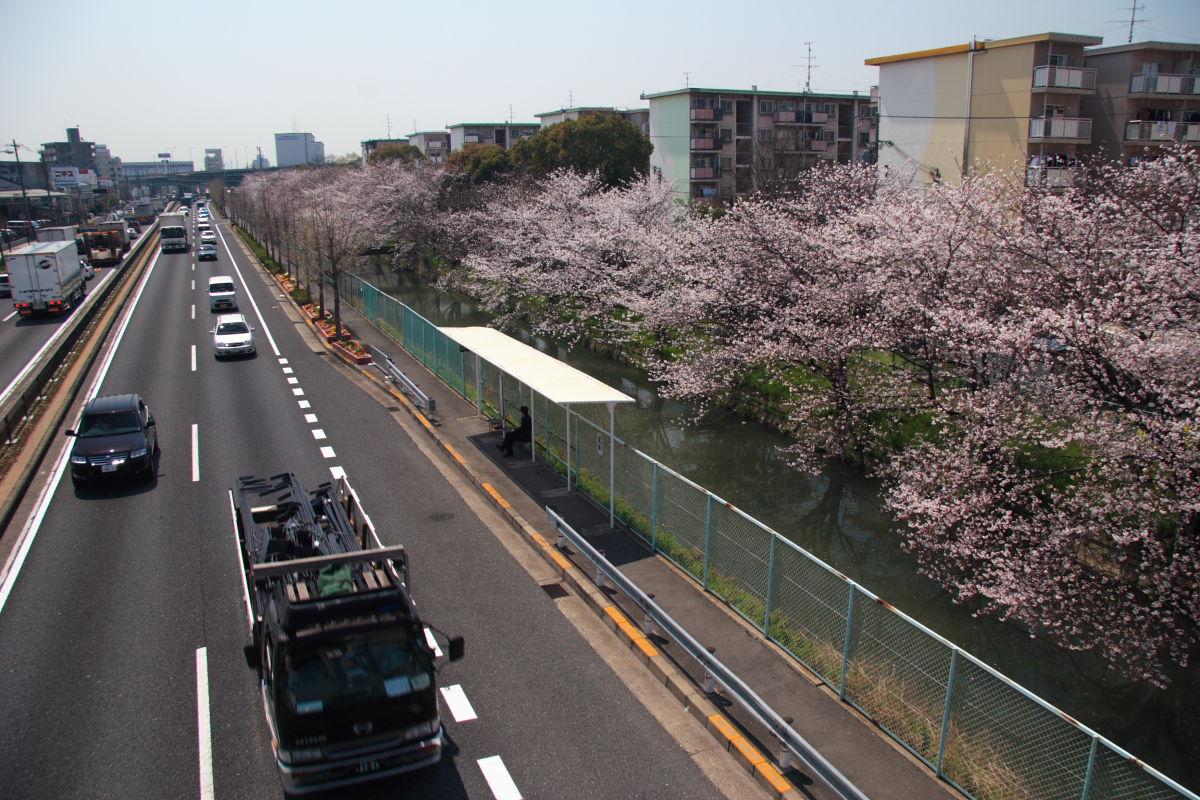 近所の桜 1_f0021869_094641.jpg