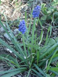 春のトスカーナ_f0106597_4265575.jpg