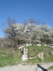 春のトスカーナ_f0106597_428899.jpg