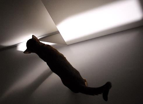[猫的]光は一期一会_e0090124_9452070.jpg