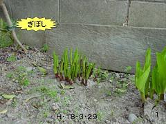 f0003174_1171869.jpg