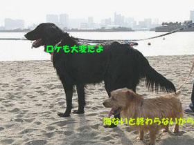 d0043478_0351796.jpg