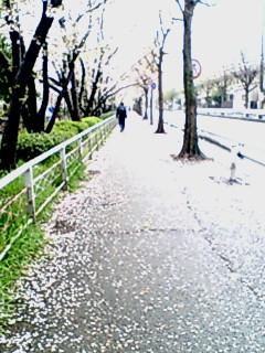 花散らしの雨…_f0008085_19142589.jpg