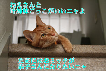 f0101903_139325.jpg