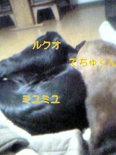 a0068231_2026330.jpg
