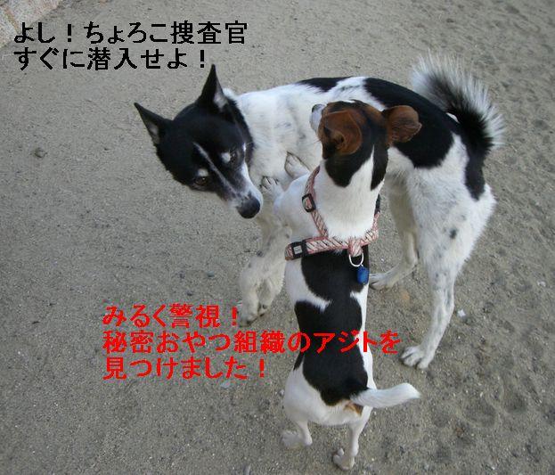 f0053952_931614.jpg