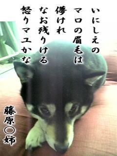 b0062668_1111283.jpg