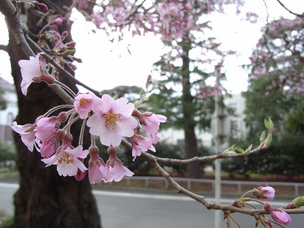 待ちわびた春の訪れ_f0108291_12191095.jpg