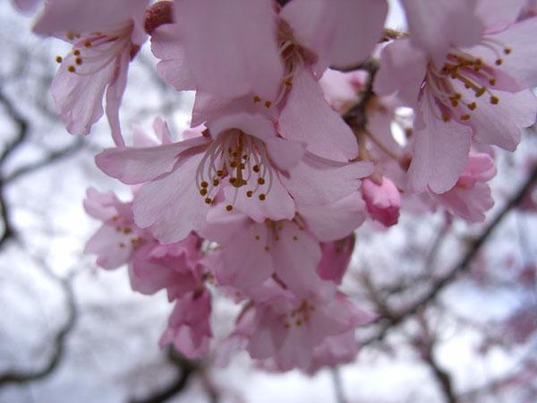 待ちわびた春の訪れ_f0108291_12192159.jpg
