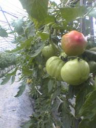 援農活動というか助け合いというか_f0018099_17119.jpg
