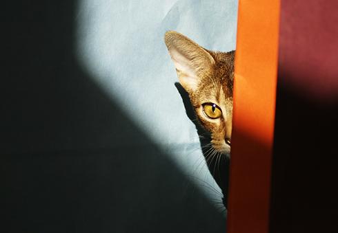 [猫的]色イロいろ_e0090124_109168.jpg