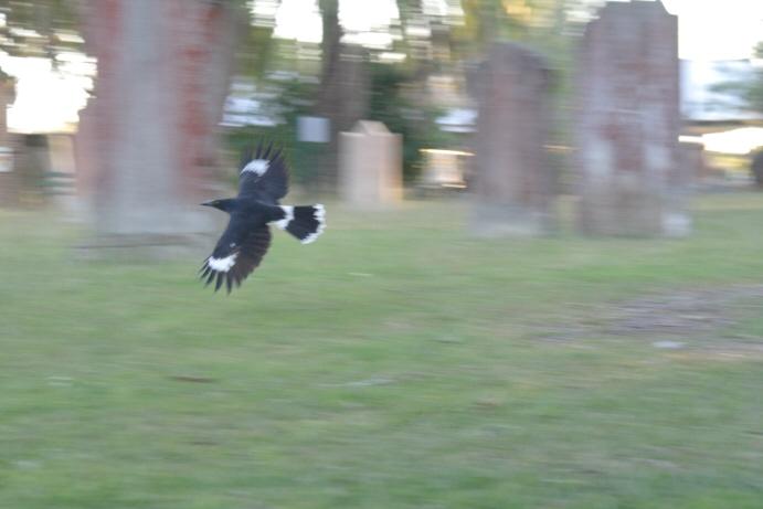 飛べ!_f0084337_1872874.jpg