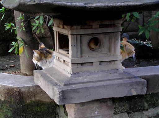 猫頭装飾付石灯籠 2006/4/16-sun_f0031535_2058575.jpg
