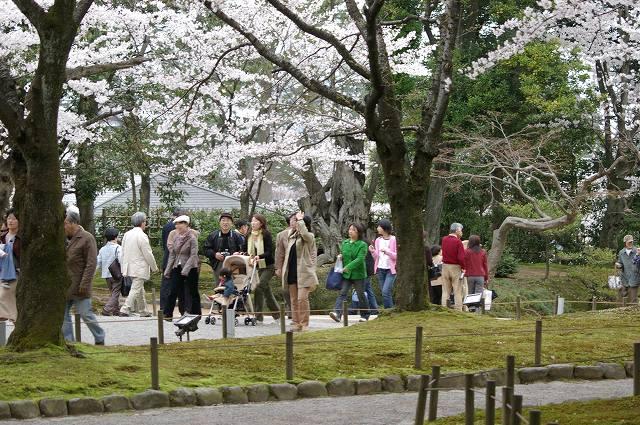 桜の兼六園~金沢_d0043136_2148401.jpg