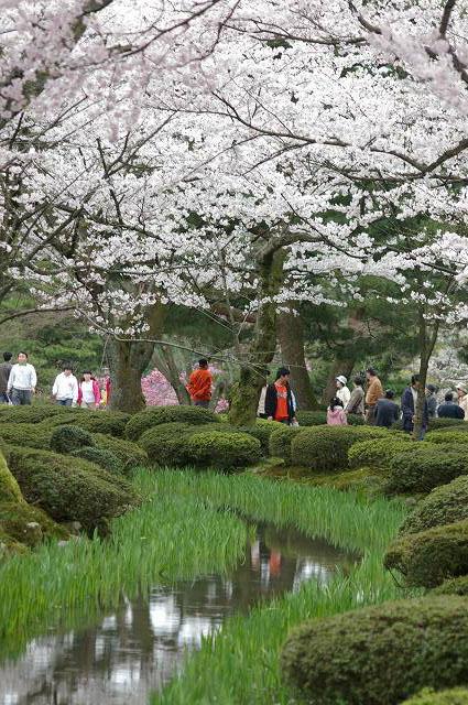 桜の兼六園~金沢_d0043136_21504281.jpg