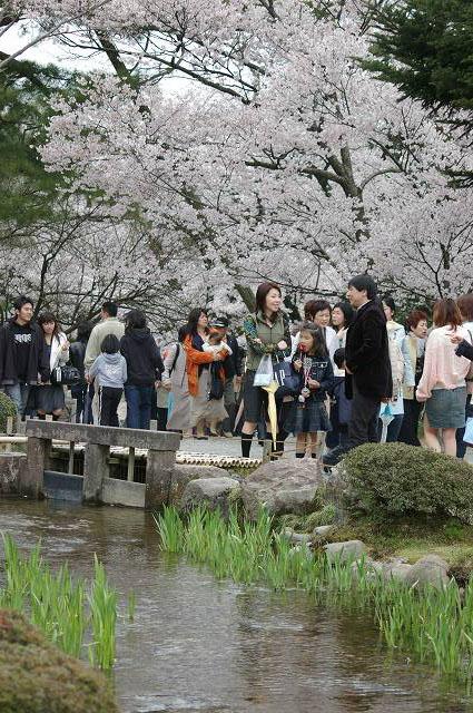 桜の兼六園~金沢_d0043136_21571642.jpg