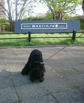 ぷら~り♪駒沢公園♪_f0096569_23371515.jpg