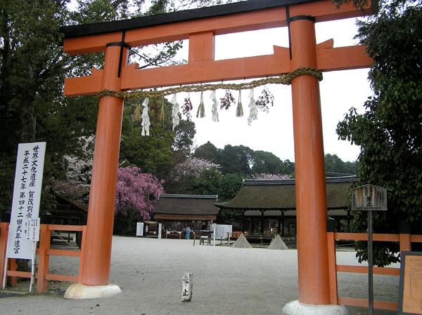 上賀茂神社と鴨川ーー花の_e0048413_2253418.jpg