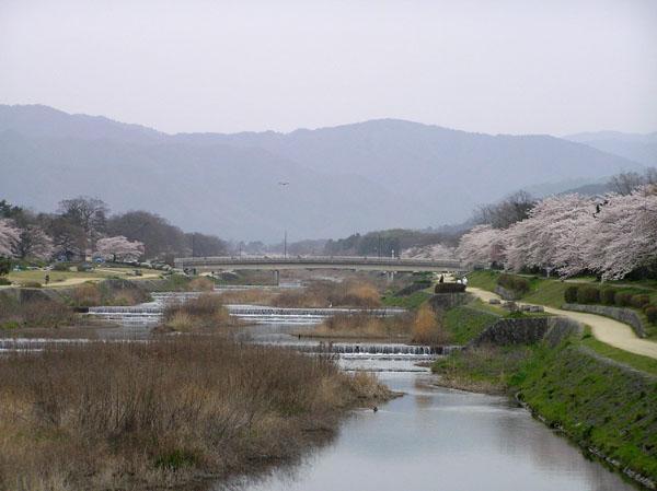 上賀茂神社と鴨川ーー花の_e0048413_2255829.jpg