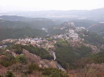 吉野の山桜_c0019551_12191349.jpg