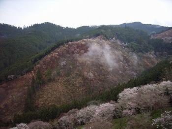 吉野の山桜_c0019551_12313942.jpg