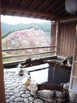 吉野の山桜_c0019551_132960.jpg
