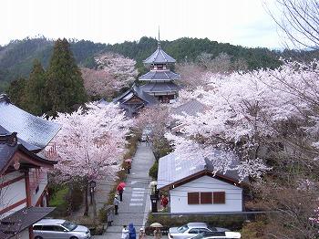 吉野の山桜_c0019551_135185.jpg