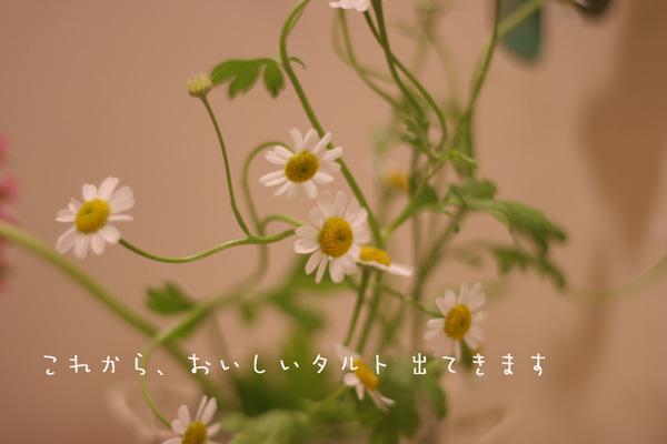 f0046897_14322428.jpg