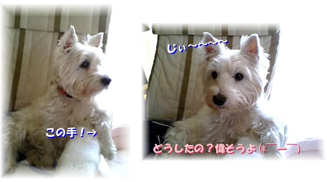 f0039907_06667.jpg