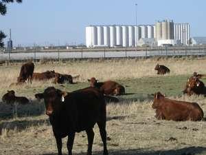 Day 6  テキサスへ_f0088456_21142936.jpg