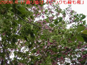 a0052666_1155635.jpg