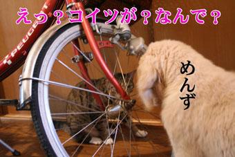 f0101903_15343641.jpg