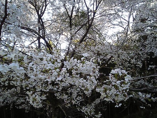 春爛漫の候_c0060919_14535498.jpg