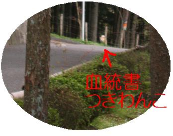 e0085147_0151053.jpg