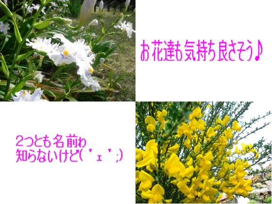 b0078073_152850100.jpg