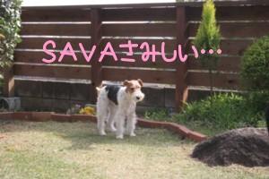 SAVA家初訪問_c0070377_223666.jpg