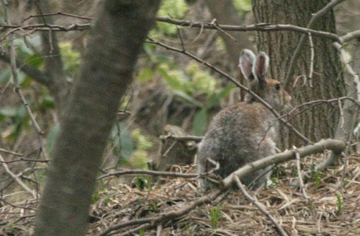 庭にウサギが来た_e0054299_1348024.jpg