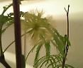 サロンに同居している植物達_f0008555_19155811.jpg