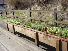 牧場通りが花いっぱい_f0064906_9254864.jpg