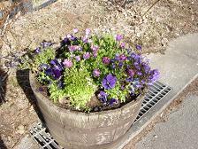 牧場通りが花いっぱい_f0064906_9282935.jpg