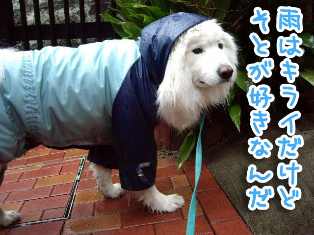 雨でも風でも_c0062832_19241651.jpg