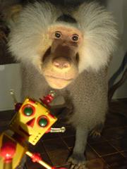 2006年4月21日 (金) 猿人との出会い_e0005548_492688.jpg